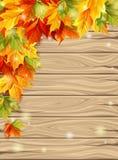 Jesień liście na tle drewniane deski, liście klonowi jaskrawi kolory również zwrócić corel ilustracji wektora Obrazy Royalty Free