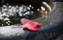 Jesień liście na wodnym zlew z słońcem zaświecają fotografia royalty free
