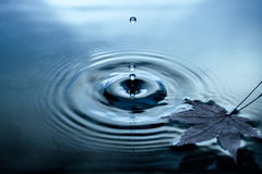 Jesień liście na wody powierzchni zdjęcia royalty free
