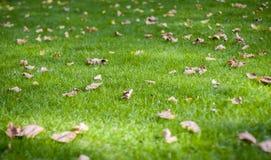 Jesień liście na zielonym gazonie Zdjęcia Royalty Free