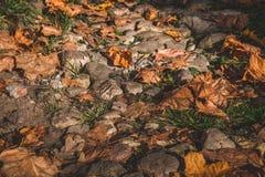 Jesień liście na ziemi zdjęcie royalty free