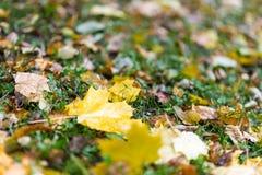 Jesień liście na ziemi Obraz Royalty Free