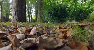 Jesień liście na ziemi zbiory