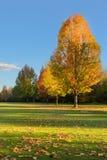 Jesień liście na ziemi Obraz Stock
