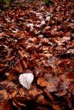 Jesień liście na ziemi Obrazy Stock
