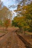 Jesień liście na ziemi i colours Obrazy Royalty Free