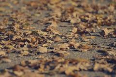 Jesień liście na ziemi, niski kąt Zdjęcie Stock