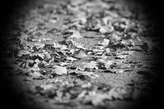 Jesień liście na ziemi, niski kąt Fotografia Stock