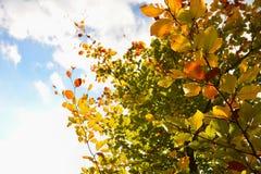 Jesień liście Naturalny sezonowy barwiony tło Kolorowy ulistnienie w parku fotografia royalty free
