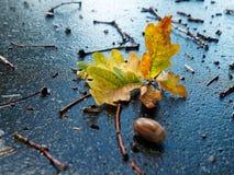 jesień liście od dębowego drzewa lying on the beach na ulicie po rai Zdjęcia Stock