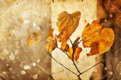 Jesień liście, płytka ostrość, makro- fotografia Zdjęcie Stock