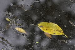 Jesień liście pod wodą Zdjęcie Royalty Free