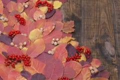 Jesień liście przeciw ciemnemu tłu Obrazy Royalty Free