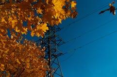 Jesień liście Przeciw niebieskiemu niebu obraz stock
