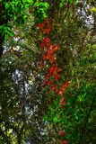 Jesień liście przy głębokim lasem zdjęcie royalty free