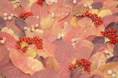 Jesień liście róża i dokrętki Obrazy Stock