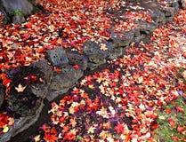 Jesień liście rewolucjonistka i złoto Zdjęcie Royalty Free