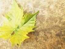 Jesień liście są spada puszkiem Fotografia Royalty Free