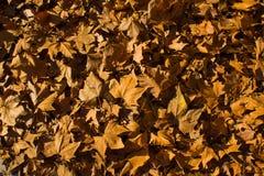 Jesień liście spadać na podłodze Madryt zdjęcie royalty free