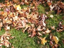 Jesień liście spadać na trawie Zdjęcia Royalty Free