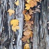 Jesień liście Spada na Kolejowym tajnym agencie Obraz Stock