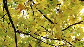 Jesień liście Spada Nad widzem zbiory wideo