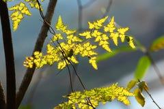Jesień liście w świetle słonecznym Zdjęcia Royalty Free