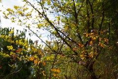 Jesień liście w drewnach fotografia royalty free