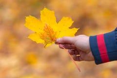 Jesień liście w dziewczyn rękach Obrazy Stock
