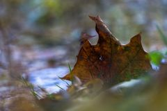 Jesień liście w kałuży Obraz Royalty Free