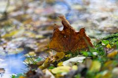 Jesień liście w kałuży podczas spadku Obrazy Royalty Free