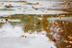 Jesień liście w kałuży woda na asfalcie podczas rain_ zdjęcie royalty free
