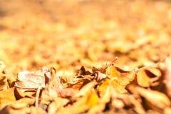 Jesień liście w lasowym zakończeniu obraz royalty free