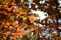Jesień liście w lesie obrazy royalty free
