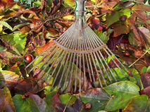 Jesień liście w ogródzie Fotografia Royalty Free
