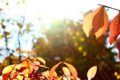 jesień liście w ogródzie botanicznym Obraz Stock