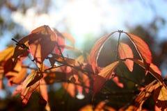 jesień liście w ogródzie botanicznym Obrazy Royalty Free