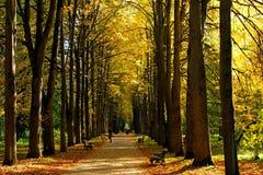 jesień liście w ogródzie botanicznym Zdjęcia Royalty Free