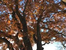 Jesień liście W Oklahoma Zdjęcia Stock