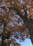 Jesień liście W Oklahoma Obraz Stock
