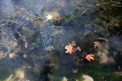 Jesień liście w płytkiej wodzie Fotografia Stock