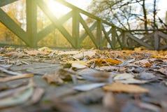 Jesień liście w parku Zdjęcie Royalty Free