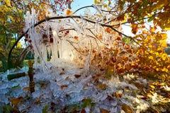 Jesień liście w parku i sopel obrazy stock