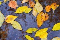 Jesień liście w podeszczowej kałuży Zdjęcie Stock