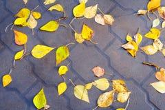 Jesień liście w podeszczowej kałuży Zdjęcia Royalty Free