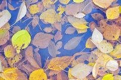 Jesień liście w podeszczowej kałuży Fotografia Royalty Free