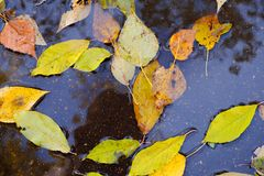 Jesień liście w podeszczowej kałuży Zdjęcia Stock