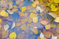 Jesień liście w podeszczowej kałuży Obrazy Stock