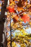 Jesień liście z drzewami Obrazy Royalty Free