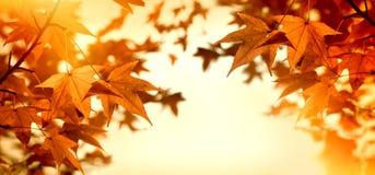 Jesień liście zaświecali światłem słonecznym - słońce promienie Obrazy Stock